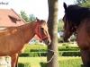 zdjecia-koni-2