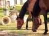 zdjecia-koni