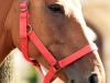 zdjecie-konia