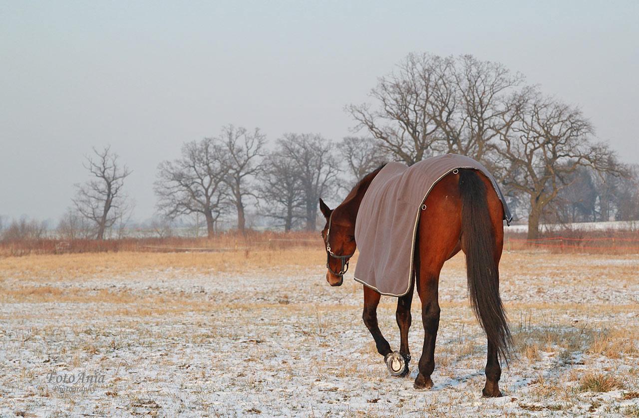 konie-szalsza2