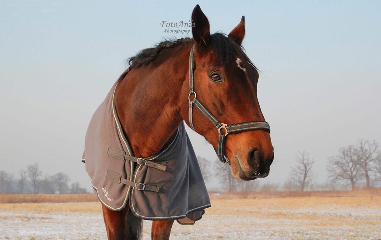 konie-szalsza3