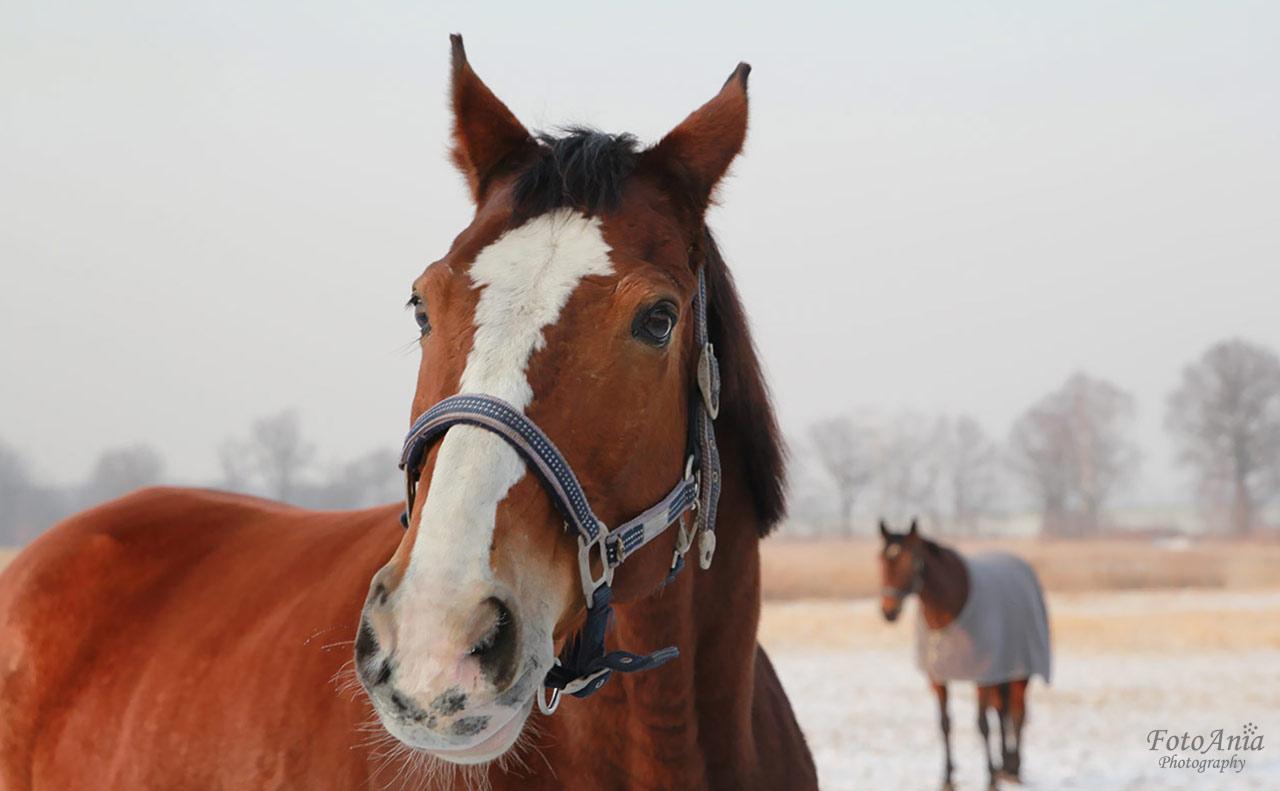 konie-szalsza4