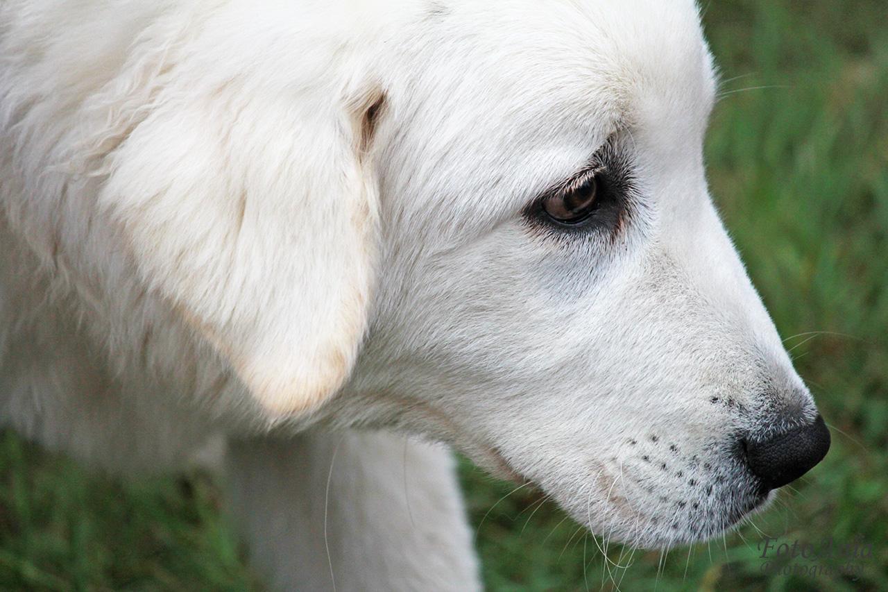 zdjecia-psow